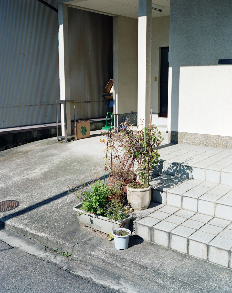 Potted plants, 2010